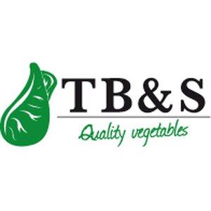 TB & S B.V. logo
