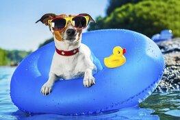 Hondenzwemmen bij Zwembad de Bever