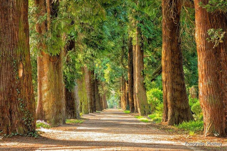 Lezing over een bijzondere boom: De Beuk