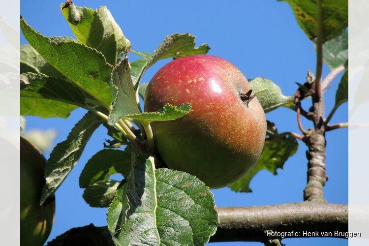 Kinderactiviteit: Appels plukken in de Eilandspolder