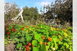 Adopteer een vierkante meter en red Hortus Alkmaar