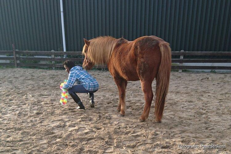 kennismakingsdag van Paardenkern en EquiVisie