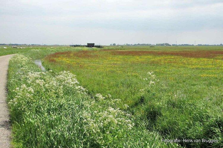 Brede coalitie van organisaties zet schouders onder meer biodiversiteit in Noord-Holland