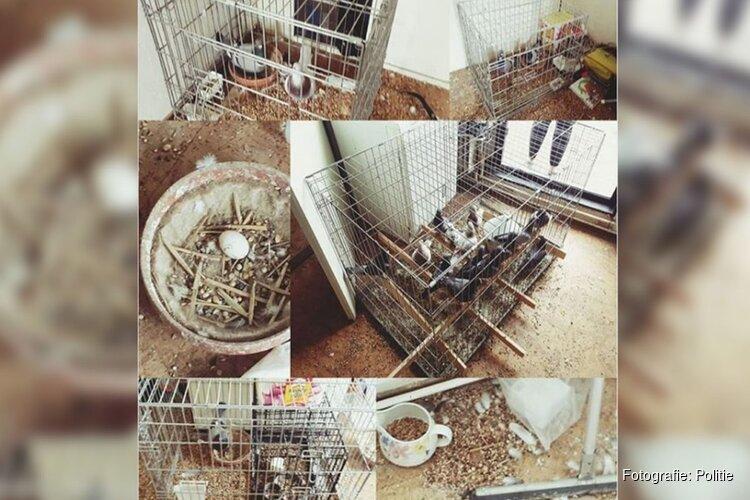 Dierenmishandeling: dertig duiven in minihokjes in Alkmaarse woning