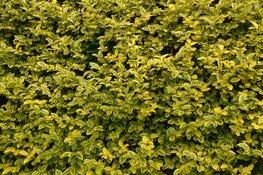 Alkmaar gaat drie minibossen aanleggen in woonwijken