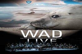 WADfilm live opent seizoen van De Vest met jarig Noordpool Orkest