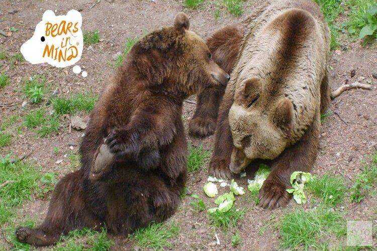 Bescherm de beren en hun leefgebied