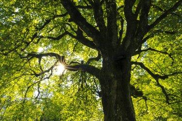 Rechter: ziekenhuis mag bomen De Hout kappen, ondanks bezwaren natuurgroep
