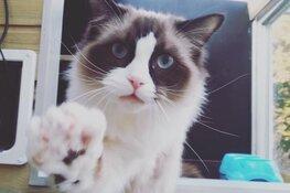 Vier kattenhotels in Noord-Holland slaan de handen ineen voor Coronapatiënten en zorgverleners