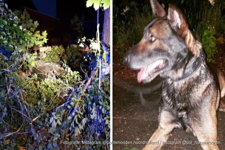 Politiehond Milow vond vluchtende Alkmaarder (41): hij stalkte ex al dagen